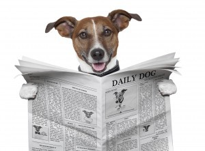 dog-reading-newspaper-top-five-most-read-300x221